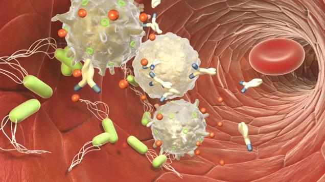 immunsystem_bakterien