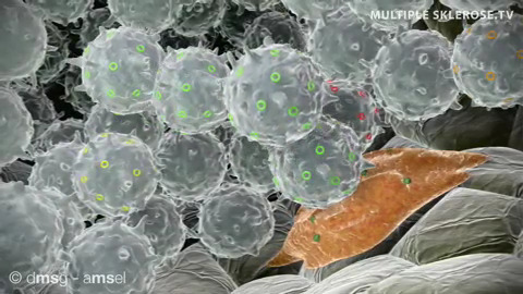 Immunsystem-t-zellen-fresszelle